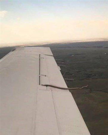 Uçak kanadında sarkan yılan